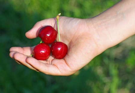 altruism: muchos cereza roja en una mano de la mano del ni?o en verano
