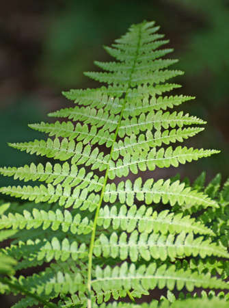 undergrowth: fern leaf green in the middle of the undergrowth in the mountains