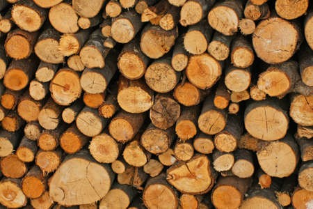 woodshed: Woodshed with logs cut and perfectly aligned for heating during winter Stock Photo