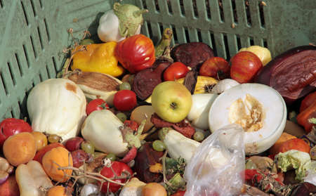 scraps of rotten fruit and vegetables used as manure in a farm photo