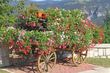 beautify: beautiful mountain flower cart with many Geraniums and other flowers to beautify the city Stock Photo