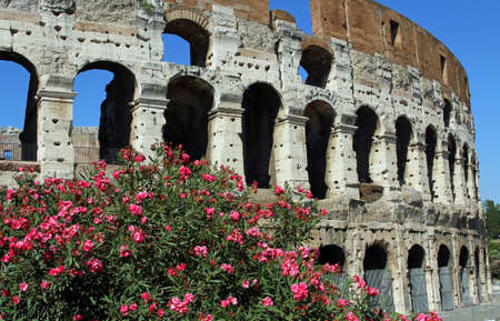imposing: Arches of the imposing Colosseum among flowering plants of Oleander in Rome