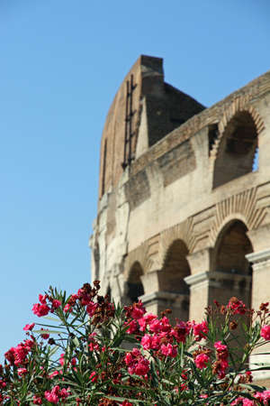 Arches of the imposing Colosseum among flowering plants of Oleander in Rome   photo