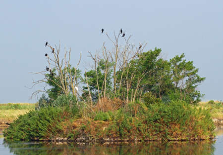 omen: black vultures and crows in the uninhabited island as an ancient omen of death 2 Stock Photo
