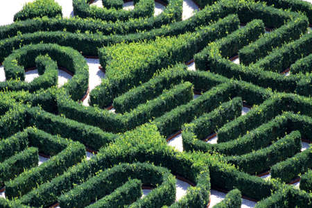 complicated maze made with hedges in a garden of a villa photo
