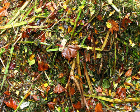 public waste: pile of dry leaves and branches from the gardener when cleaning the garden