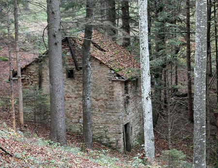 demolished house: demolished House abandoned in thick forest in autumn Stock Photo