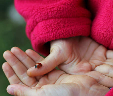 lucky charm: small Ladybird lucky charm in the hand of the girl