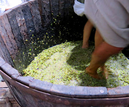 bunch of grapes: men and women inside the tank to press the white grapes to make good wine Stock Photo