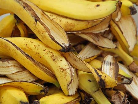 muchas cáscaras de plátano en el compostador para humus para la agricultura orgánica