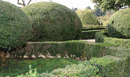 accurately: nice Italian garden with hedges cut very accurately in the Park a beautiful Venetian villa in Italy