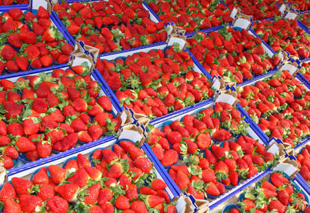 grocery store series: lots of boxes and trays of ripe red Strawberry for sale at vegetable market