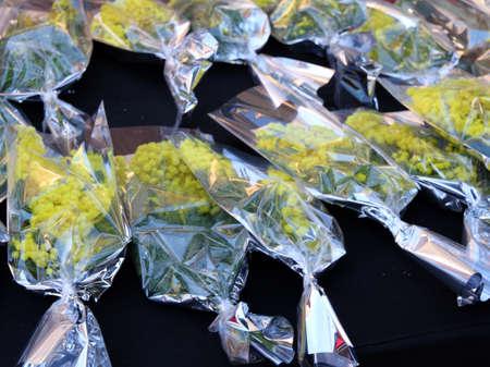 mimose: mazzi di mimose gialle venduti al mercato per il giorno internazionale della donna