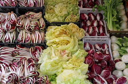 treviso: Purple and Red radicchio and chicory salad and other fruits for sale at the market in the stand of the greengrocer