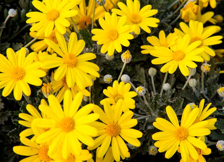 nurseryman: yellow flowers and daisies from the florist for sale