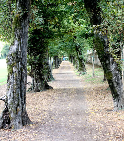 where to go: street of a large public park where you can go jogging