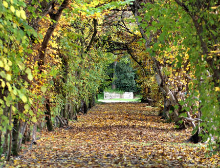 tunnel of leaves with a small road to infinity in November Stock Photo - 27511381