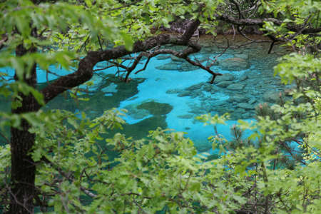 clearness: crystal-clear Alpine Lake pristine water in the middle of the forest of green trees