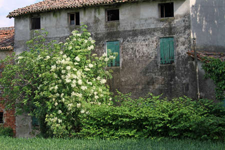 uncultivated: abandoned country house with the uncultivated garden and green grass arbustill