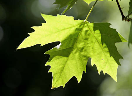 Green Tree leaf during a bright summer day Stock Photo