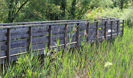 naturalistic: solid wooden walkway for visiting natural oasis in the reeds of a naturalistic Park 1
