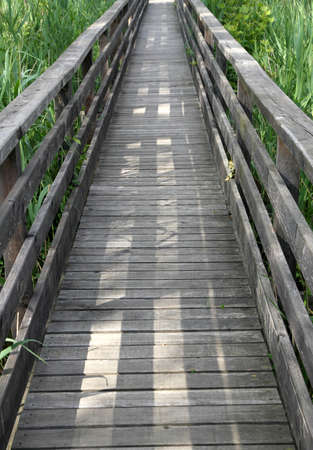 naturalistic: long wooden walkway in the reeds of a naturalistic Park 4