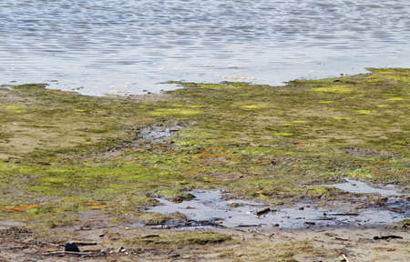 brackish water: green Marsh with brackish water in an area of natural park