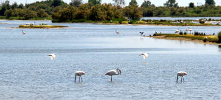 egrets: Pink flamingos, herons, egrets and many birds in a nature reserve