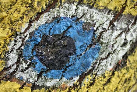 Enorme occhio dipinto sulla corteccia di un albero Archivio Fotografico - 29205580