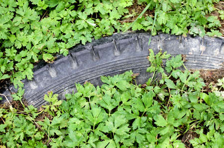disuse: very pollutant black tyre submerged by green vegetation
