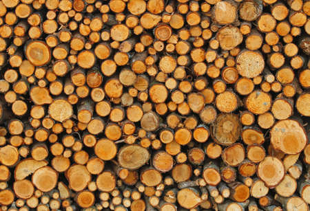 woodshed: little tree trunks in the Woodshed of lumberjack who is getting ready for the cold winter