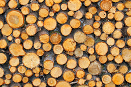woodshed: tree trunks in the Woodshed of lumberjack who is getting ready for the winter Stock Photo