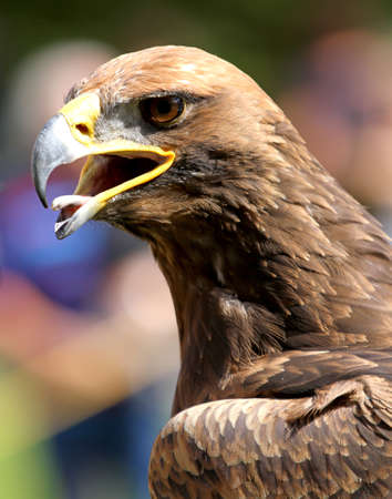 close-up of a mighty free Eagle