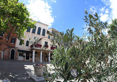 persecution: olive tree in the square of the Jewish ghetto of Venice Stock Photo