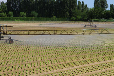 large intensive irrigation in vegetable field in summer photo