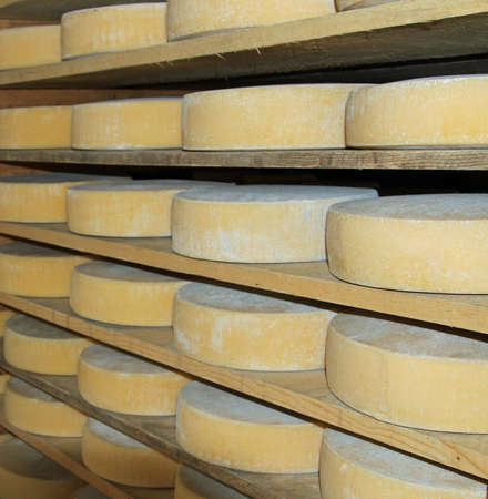 major forms of aged cheese in the dairy of a mountain hut photo