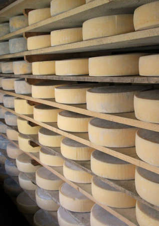 milkman: many forms of fresh cheese in the dairy of a mountain hut