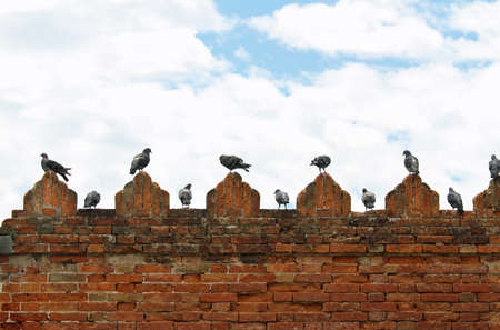 Group of pigeons and doves on spires of castle wall photo