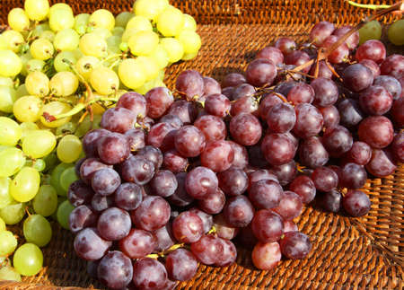 large clusters of mature grapes after the harvest in the countryside
