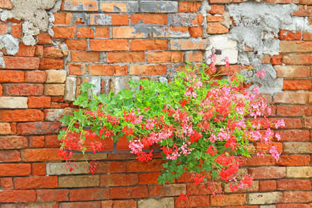 flowered: flowered balconies with pots of Geraniums in the rural house with red bricks Stock Photo