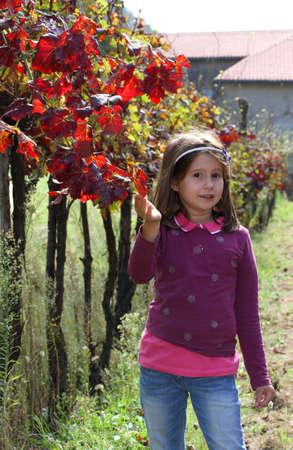 jolie fille: jolie fille dans la vigne en automne avec les feuilles rouges