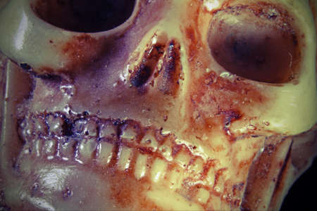 terrifying: terrifying skull with teeth and eye orbits