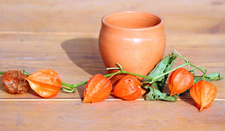 alkekengi: Physalis alkekengi plant and a ancient jar