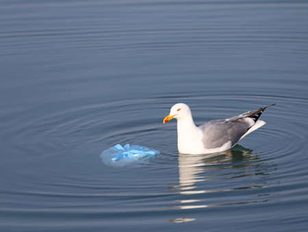 degradation: Great Black-headed Gull on the sea near a bag of rubbish Stock Photo