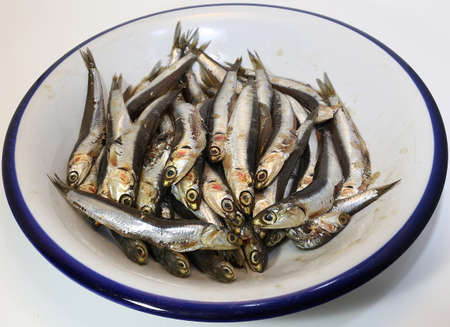 bluefish: dish with freshly caught raw anchovies ready to be fried