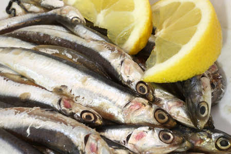 salt water fish: dish with fresh sardines just fished and two slices of lemon