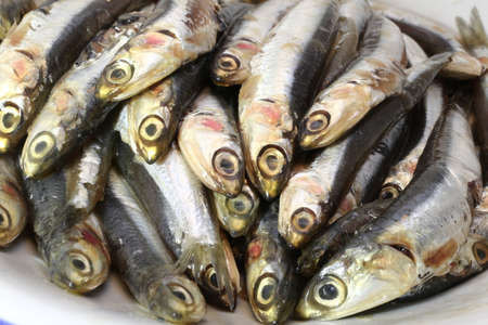 bluefish: genuine raw anchovies ready to Cook