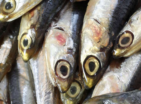 bluefish: genuine raw anchovies just fish for sale in fish market