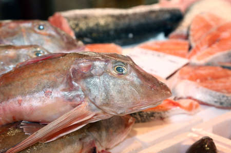 the big fish: big fish on sale in fish market in southern Italy