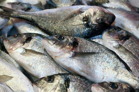 daurade: big bream caught fresh in the Mediterranean Sea on sale in fish market